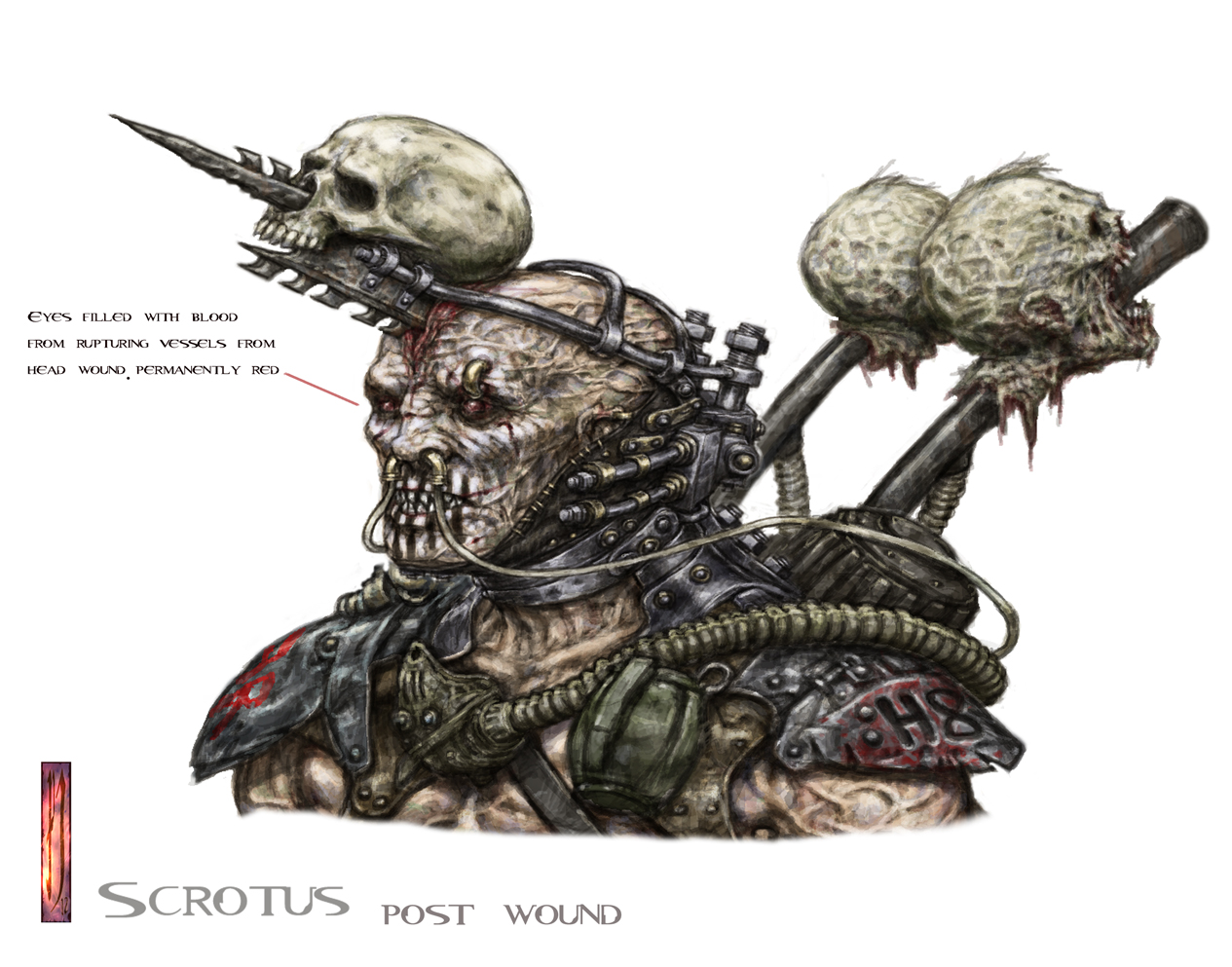 Scrotus post head wound colour head